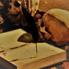 Horror-Buch auf dem eine Schreibfeder steht und um das herum zwei Schädel liegen
